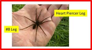 Fen Raft Spider